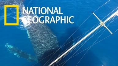 乘客好幸運!三頭座頭鯨就在船邊跳起舞來!