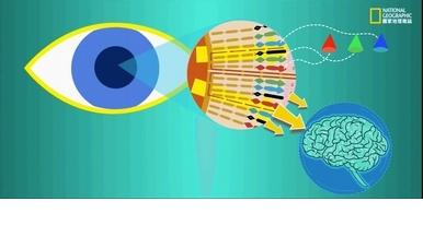 眼睛不僅是靈魂之窗,也是未來醫學之窗