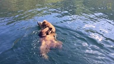可愛直擊:熊媽媽渡輪開船囉!