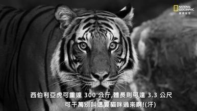 全世界贏得最「大」頭銜的動物