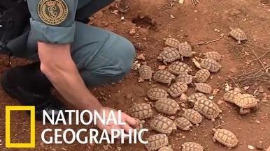 西班牙警方查獲歐洲最大非法烏龜繁殖場