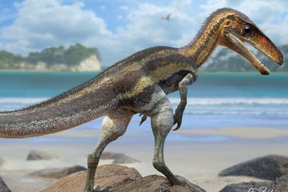精細化石顯示,這種小恐龍的觸覺超群絕倫!