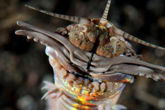臺灣野柳、八斗子發現2000萬年前巨大掠食性海蟲巢穴遺跡