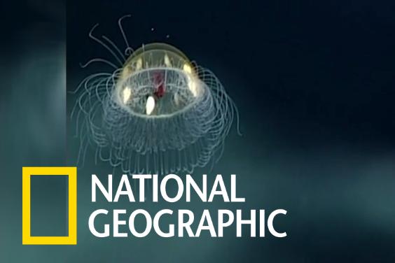 跟NOAA科學家一起觀察美麗的深海水母