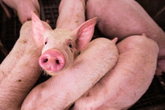 報告揭20家肉類和乳製品公司 總碳排高過德、英、法