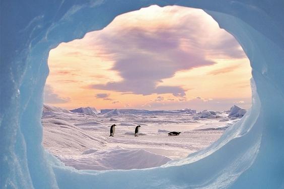 別有洞天:南極企鵝