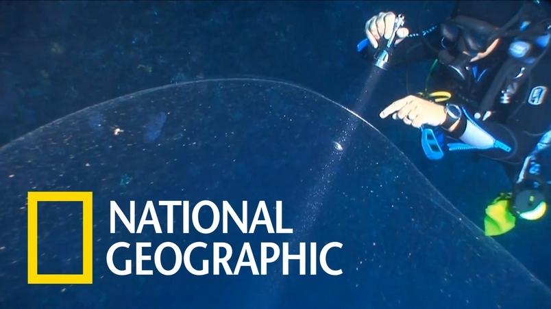 這不是野生海底愛玉凍,而是孕育百萬魷魚寶寶的搖籃