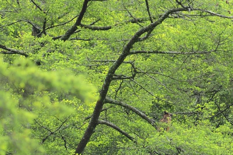 暗夜謎禽—黃魚鴞的研究回顧與新發現