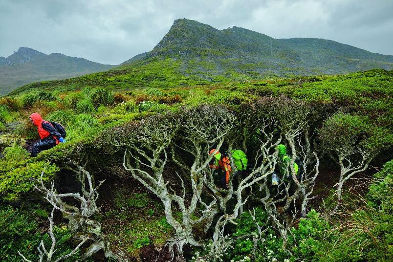 世界盡頭的樹