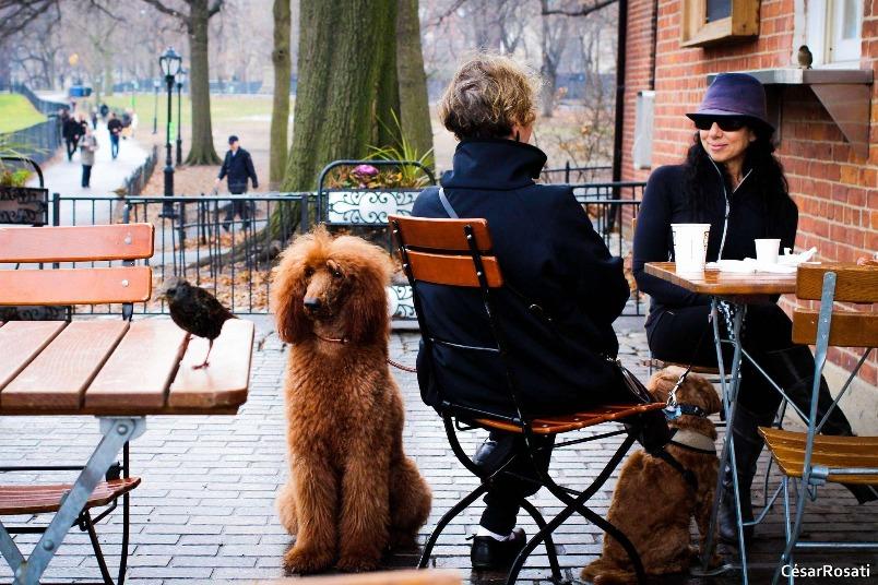 中央公園的狗狗時光