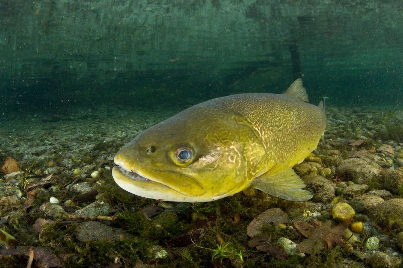 連魚都對甲基安非他命上癮?事態有多嚴重?