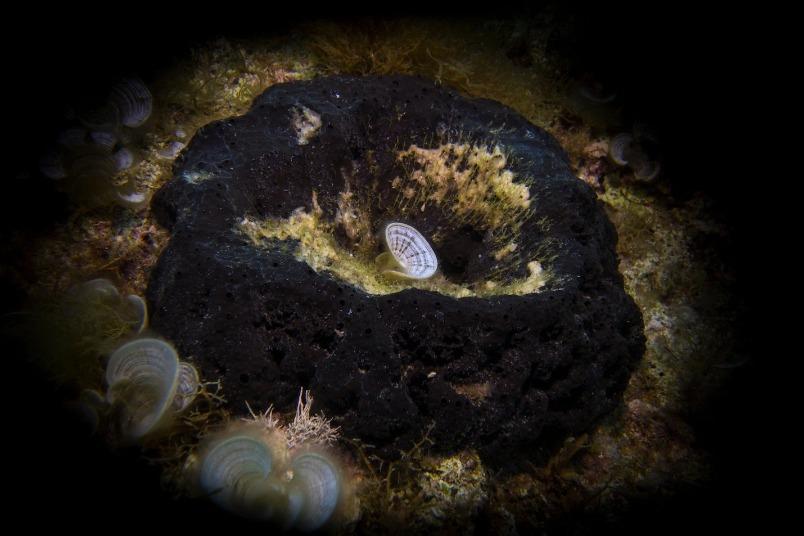近9億年前的海綿化石,可能是地球上最古老的動物