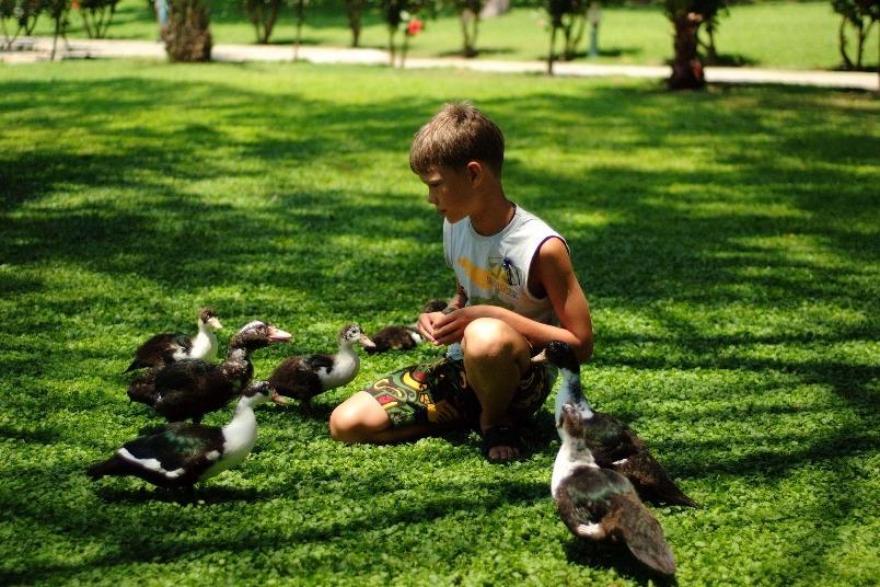 餵鴨子的男孩