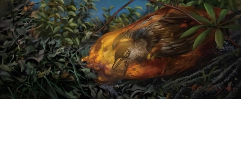 獨家!恐龍時代封印在琥珀中的鳥