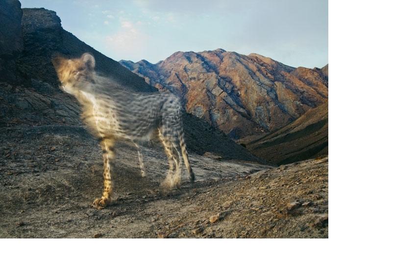 影像藝廊 :邊緣上的跑者