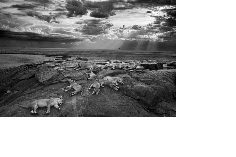 驚艷集:年度最佳野生動物攝影作品