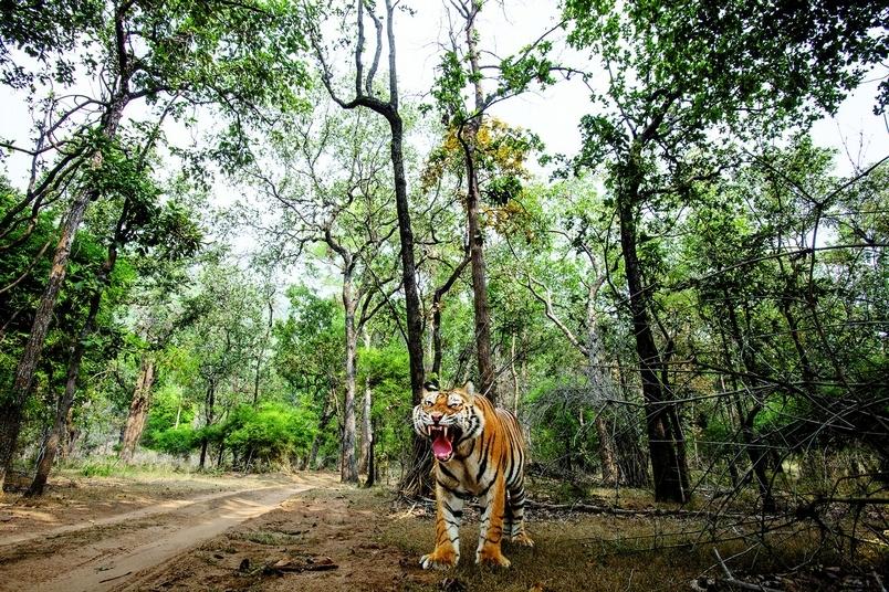 不同角度看老虎